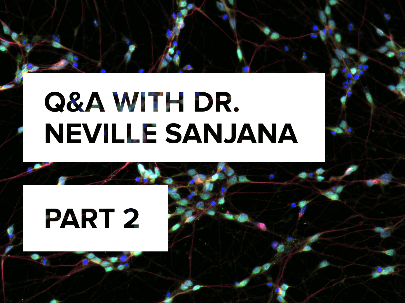 Q&A with Dr  Neville Sanjana on his career (so far) in CRISPR – PART