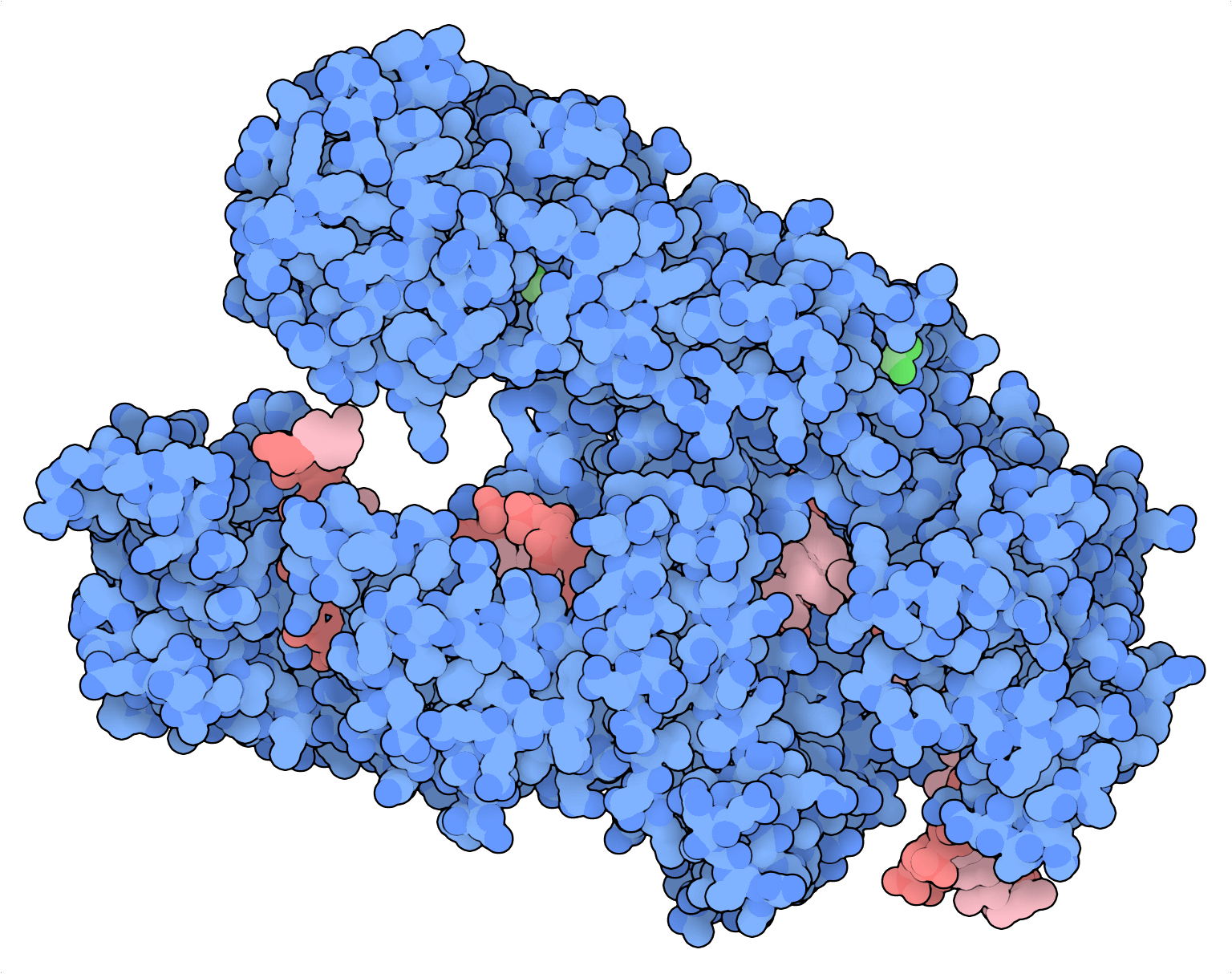 AsCas12a protein structure